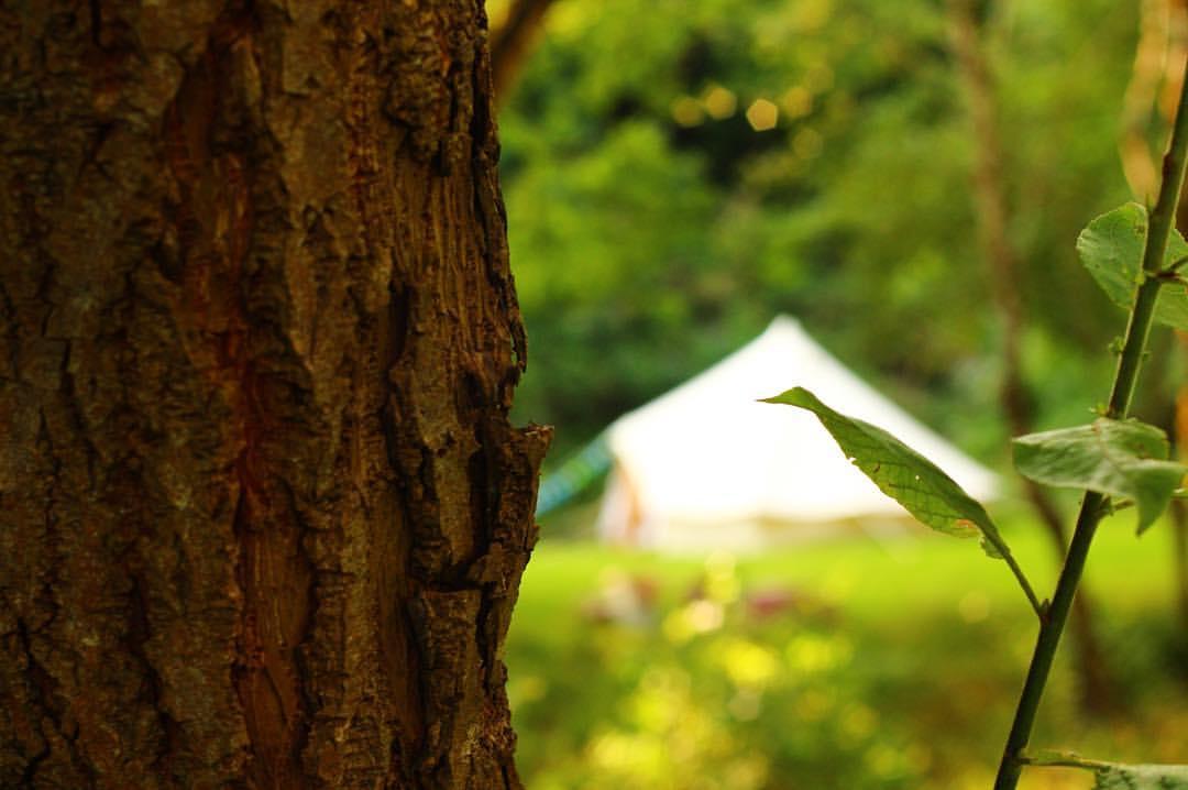 sf-campsite